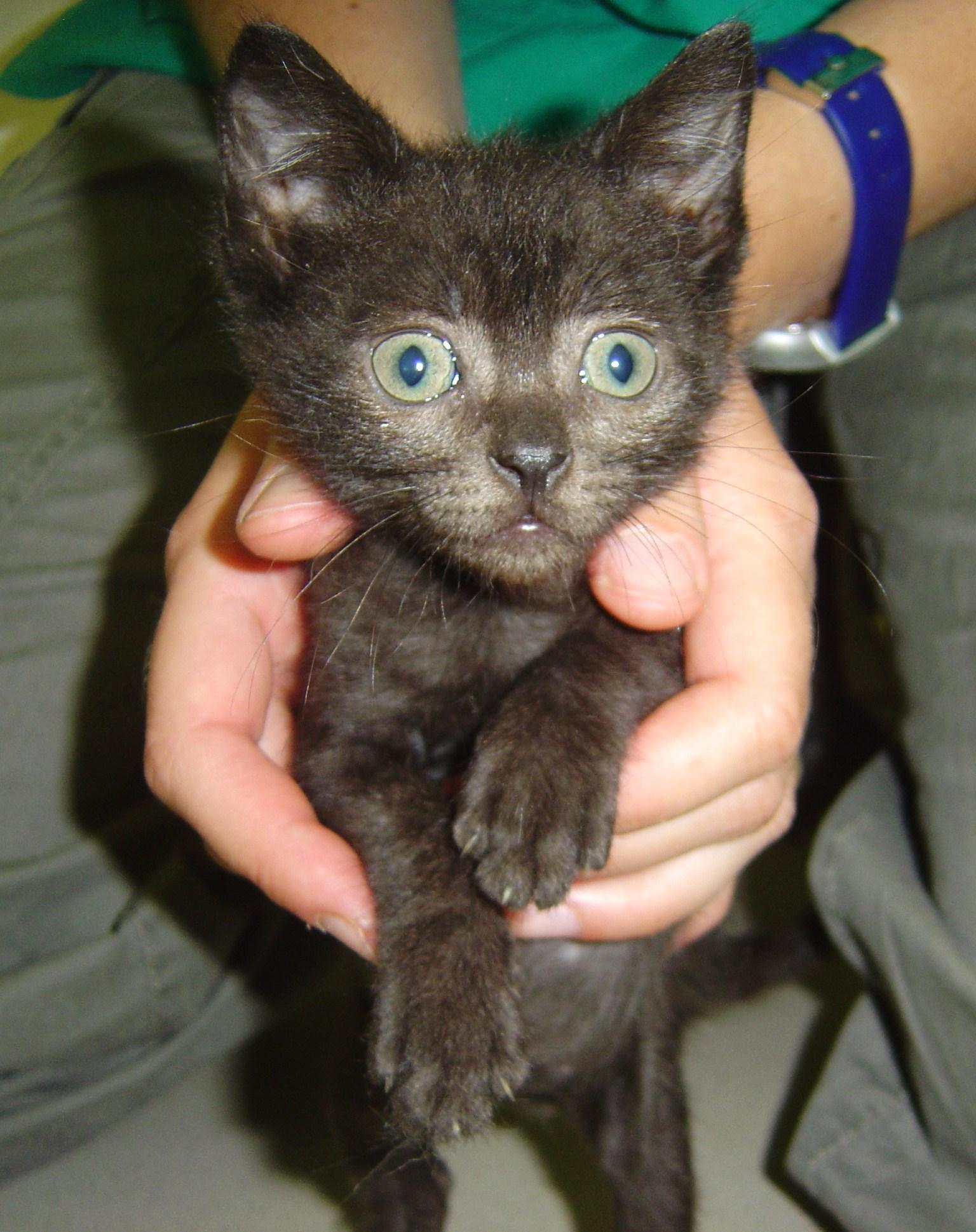 Rete Per Gatti Condominio come traslocare un gatto, un problema sottovalutato